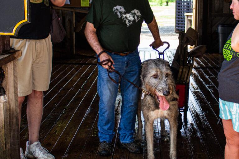 Cu & Craic Irish Wolfhound Club greet people at the bar
