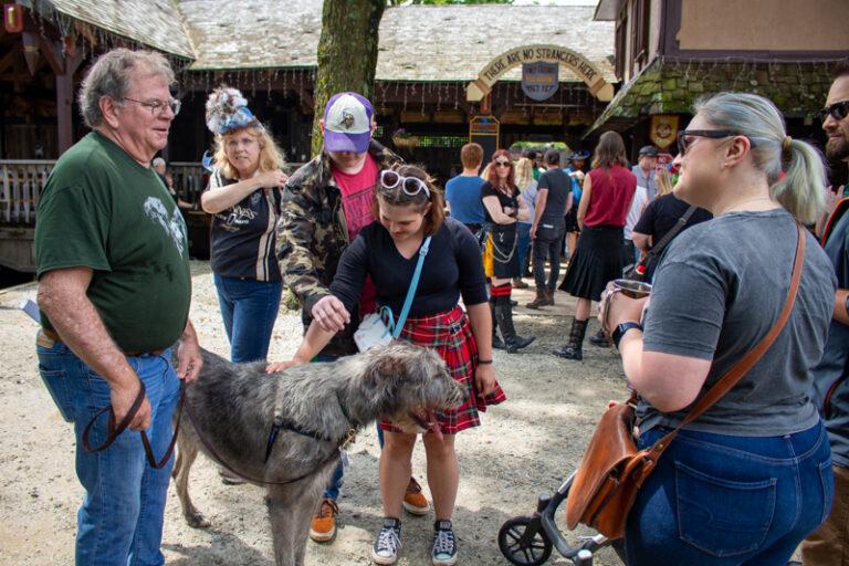 Cu & Craic Irish Wolfhounds, for a little size comparison